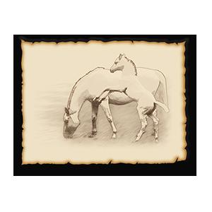 Stallions Crossing Housing Community Graphic Illustrations