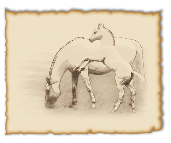 An illustration project to create a series of images styled in an old-fashioned, wild west, horse and cowboy theme to use in a marketing project for a new housing community called 'Stallions Crossing' located in San Jacinto, CA.